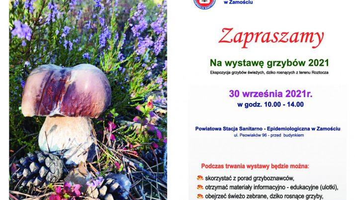 Wystawa grzybów